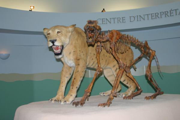 Whitehorse Yukon Beringia Center