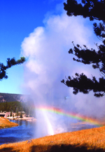 Yellowstone National Park Montana Geyser